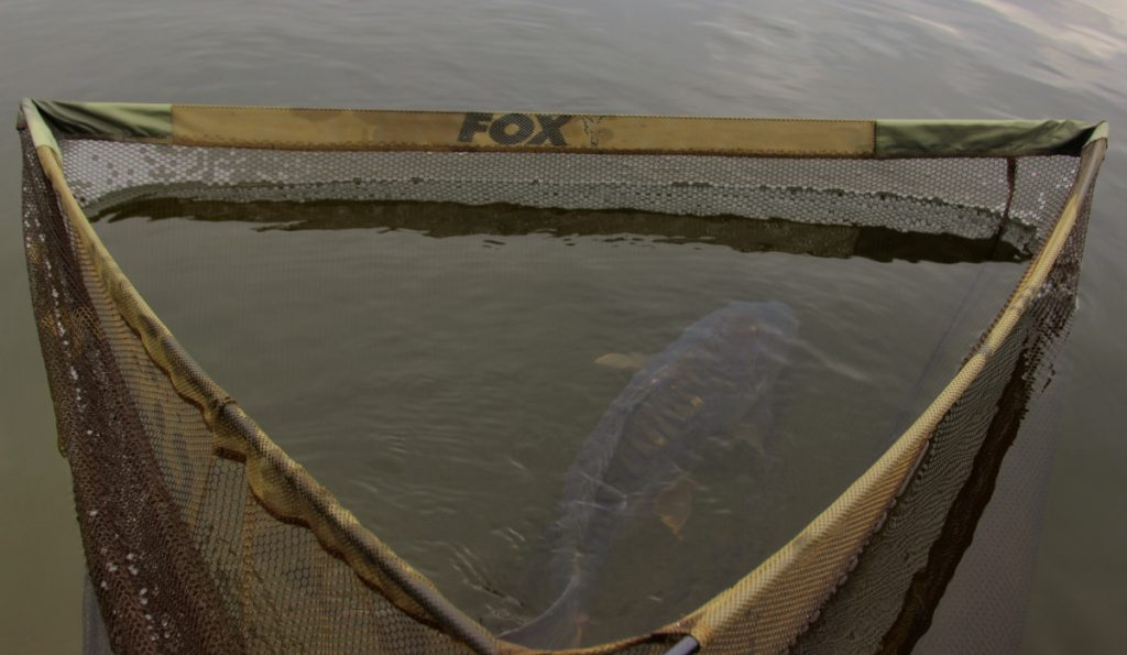 Fox Horizon x4